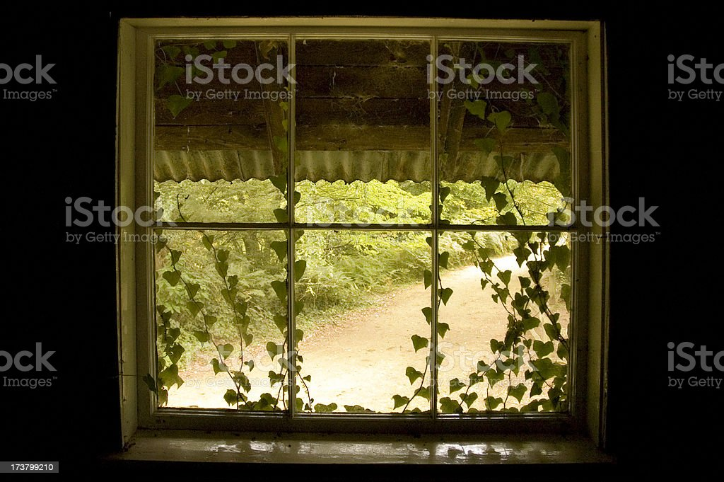 Ivy window royalty-free stock photo