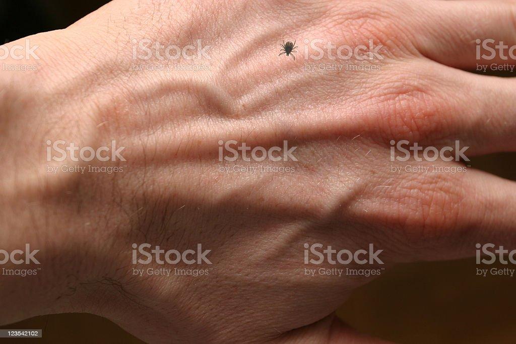 Ixodes ricinus on my hand royalty-free stock photo