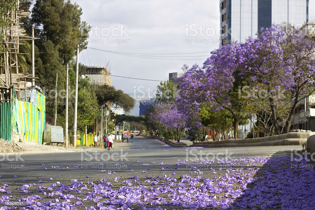 Jacaranda flowers on the street. royalty-free stock photo