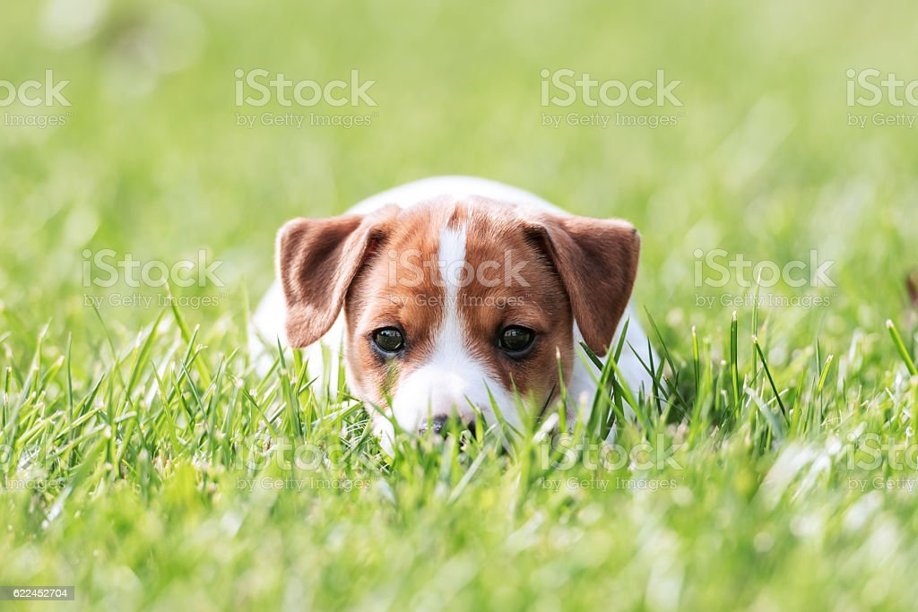 jack stock photo