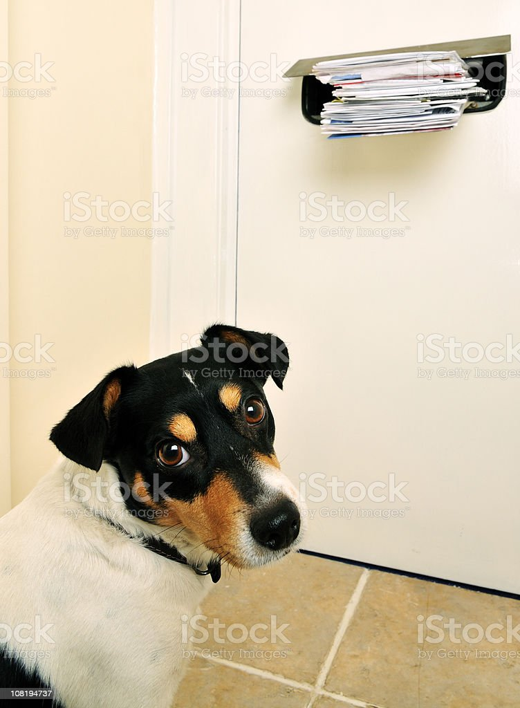 Jack Russell and the Post stock photo