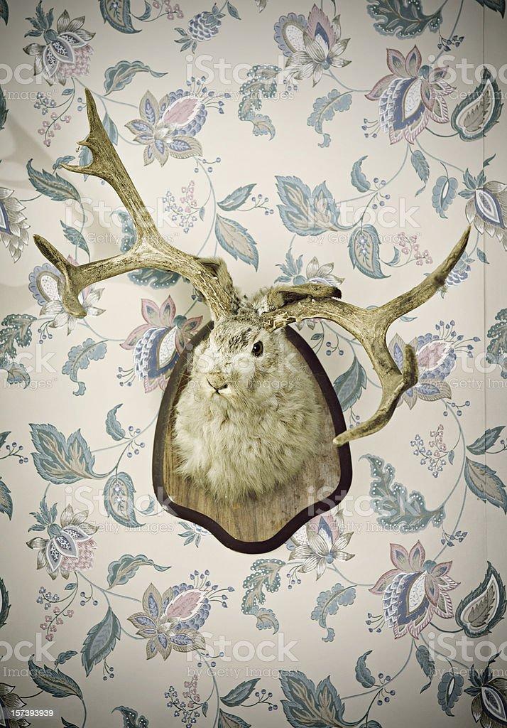 Jackalope Head Taxidermy stock photo
