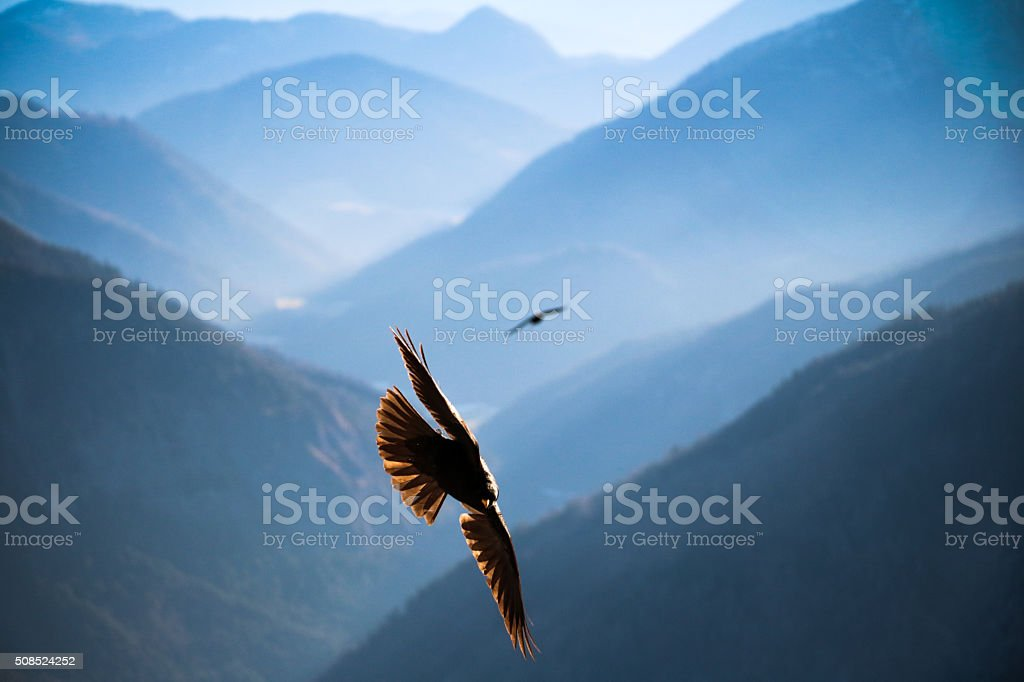 Jackdaw flying over the mountains of Bavaria stock photo