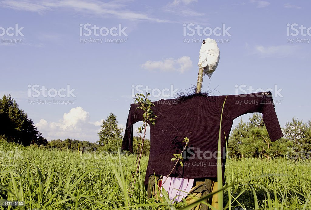 jackstraw in the summer field stock photo