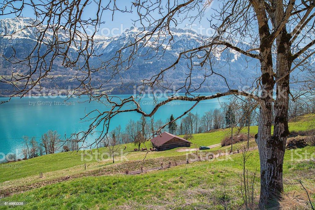 Jade Colored Swiss Alpine Lake stock photo