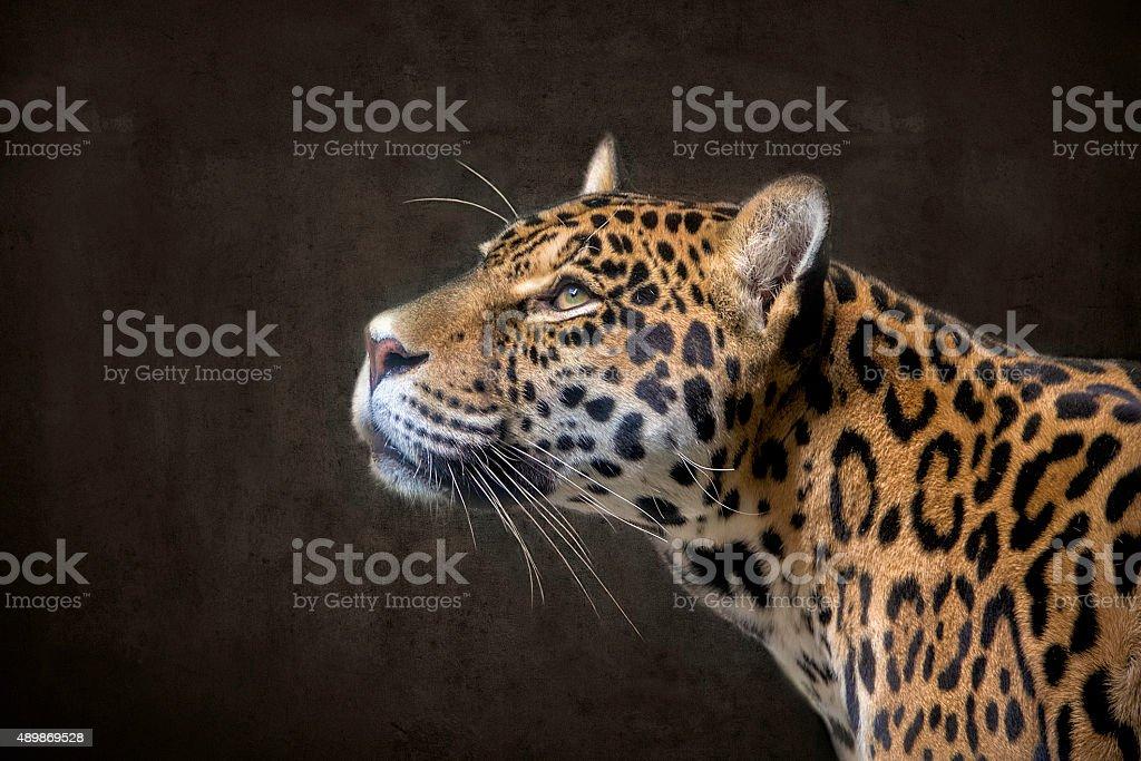 Jaguar 2 stock photo