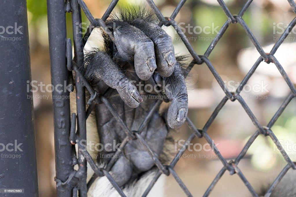 Jail Monkey stock photo