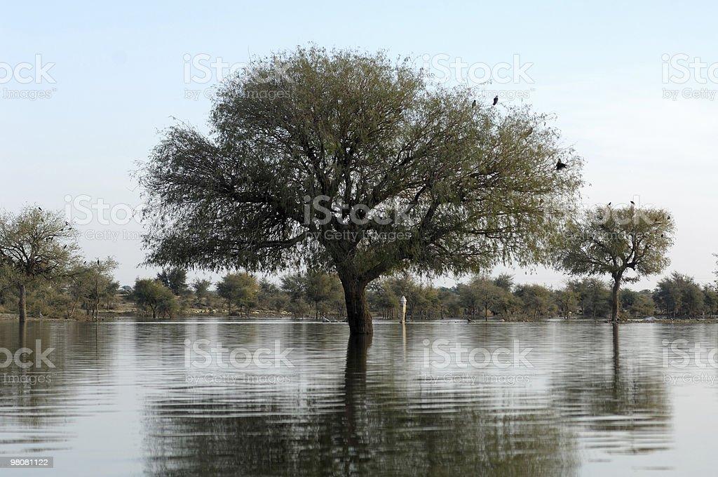 Jaisalmer - the lake stock photo