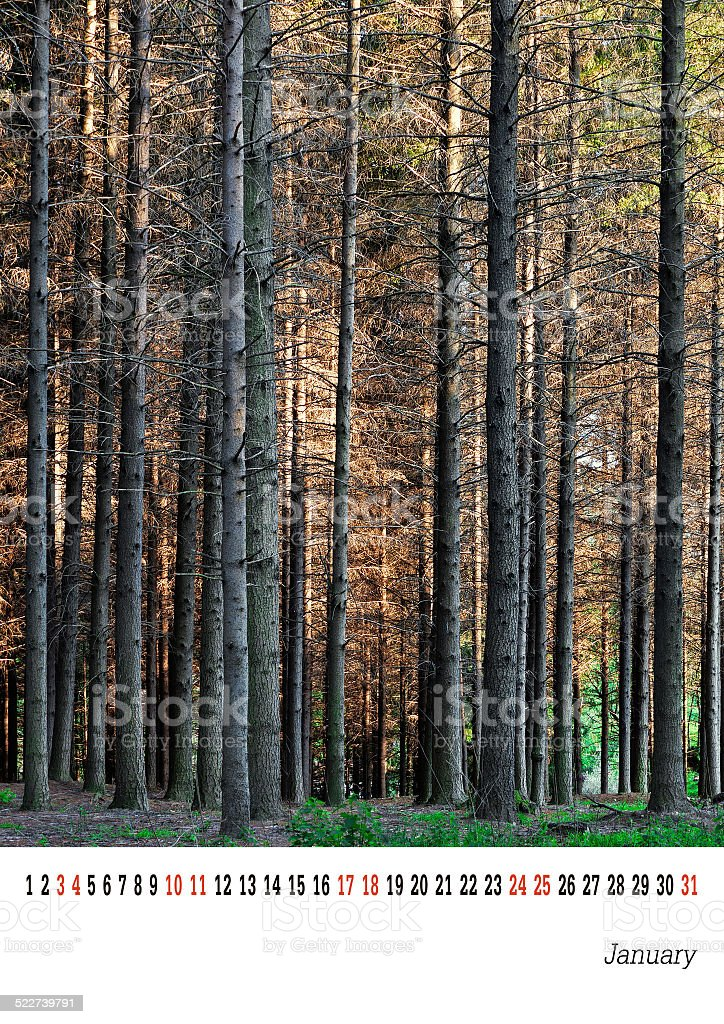 January calender 2015, pine trees. Easily customisable template. stock photo