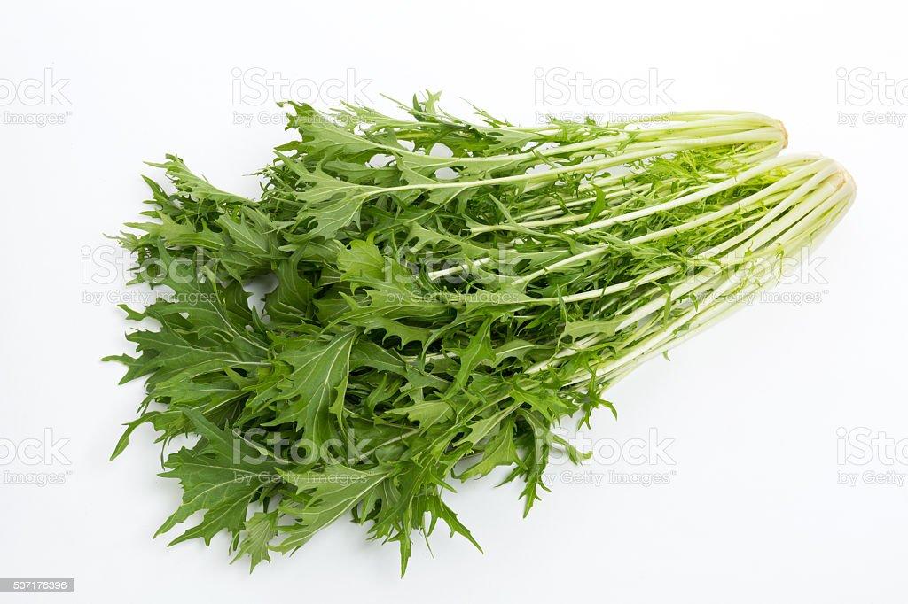 Japan of vegetables named mizuna. stock photo