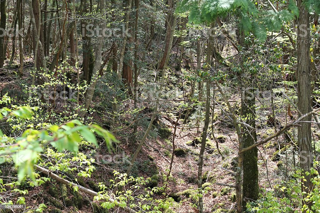 Japan suicide forest stock photo