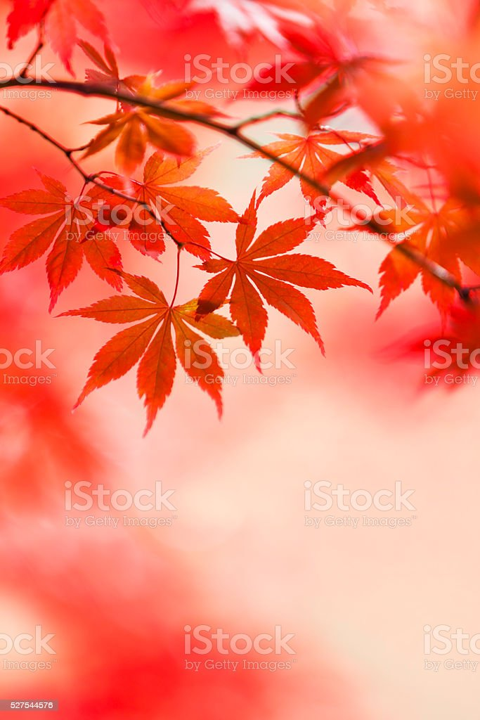 Japanese Autumn Colors stock photo