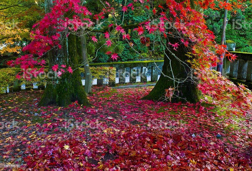 Japanese Autumn royalty-free stock photo
