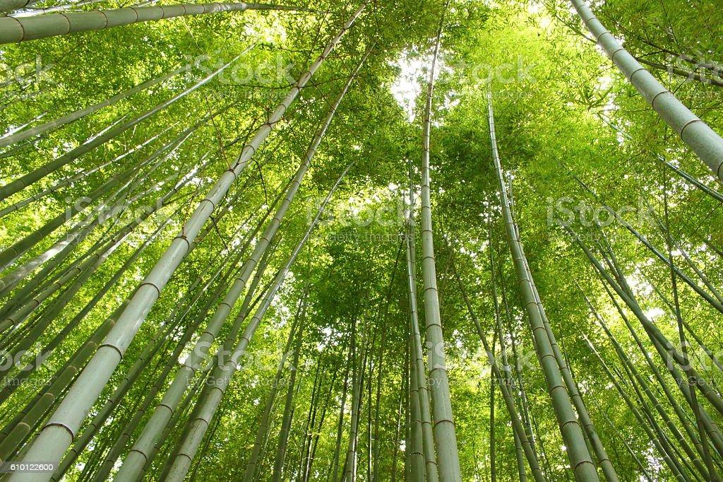 Japanese bamboo Part 1 stock photo