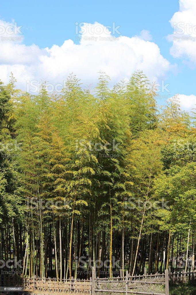 Japanese bamboo Part 7 stock photo