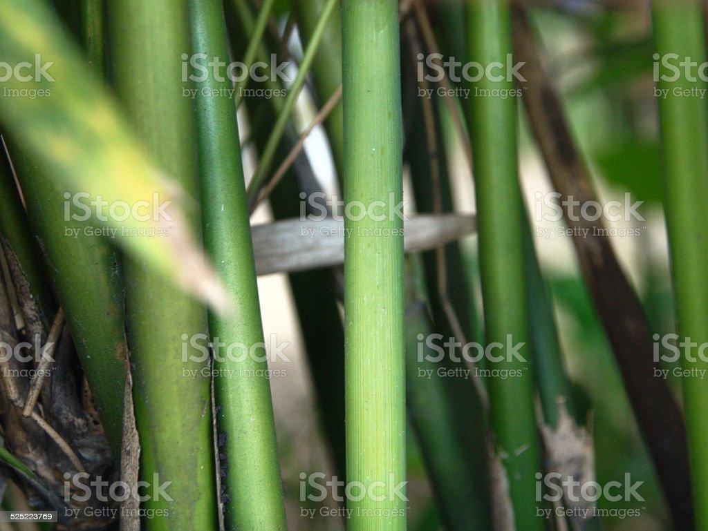 Japanese bamboo stock photo