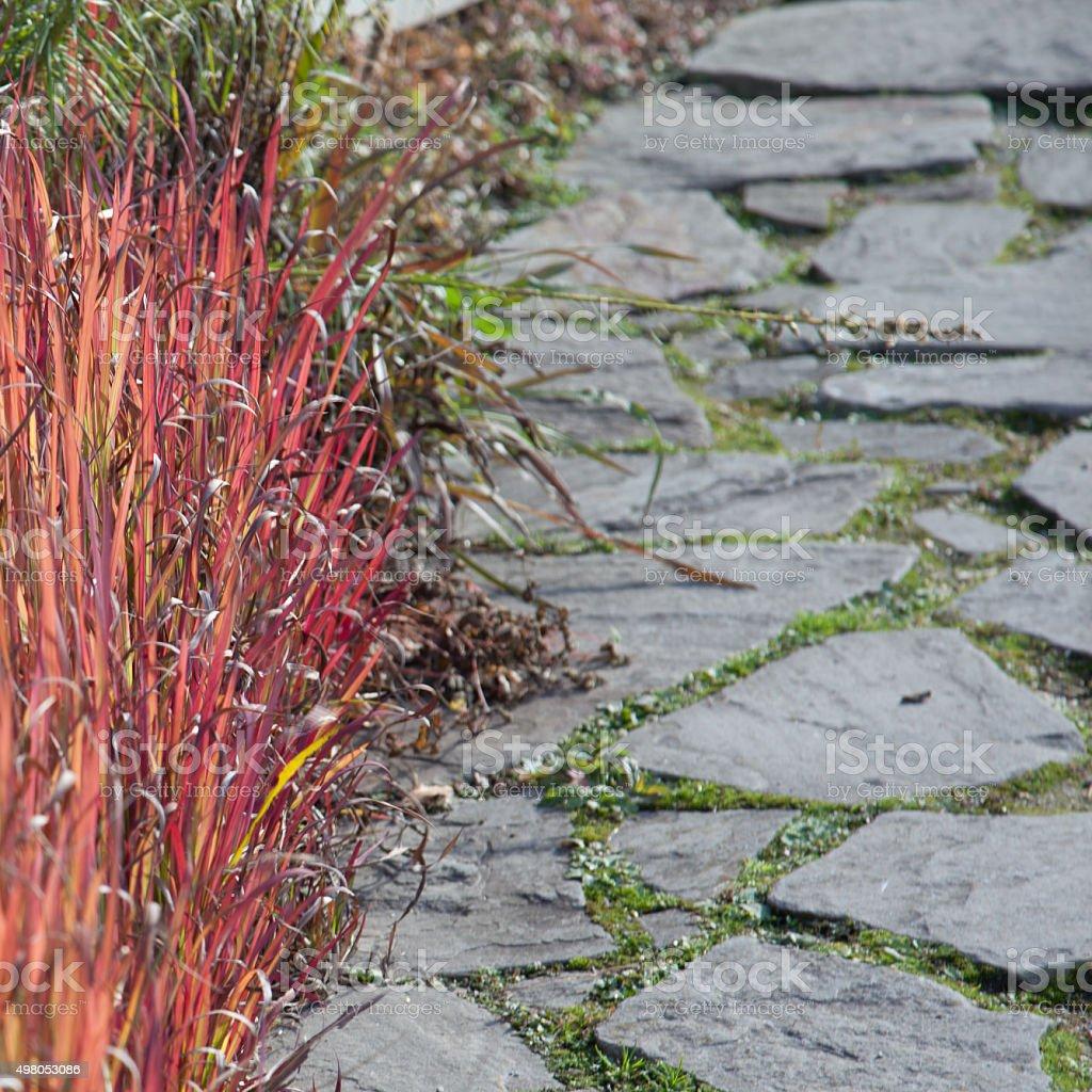 Japanese Blood Grass beside stone walkway in the garden stock photo