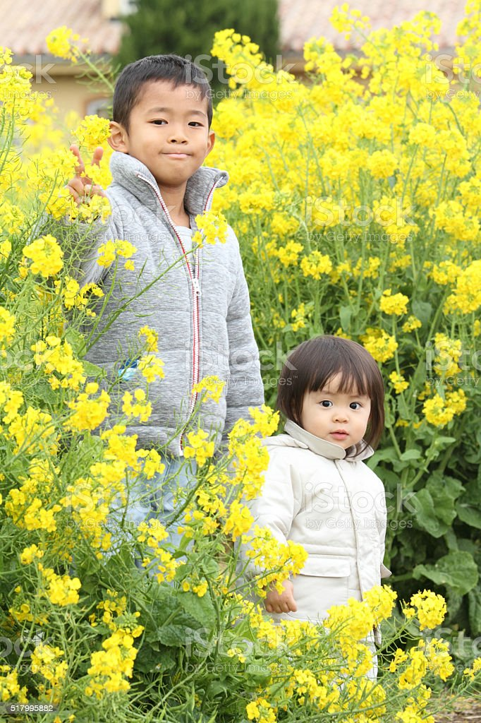Japanese brother and sister in yellow field mustard stock photo