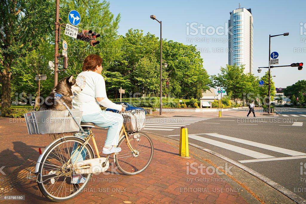 Japanese citizen transporting dog on bicycle in Takasaki Gunma Japan stock photo