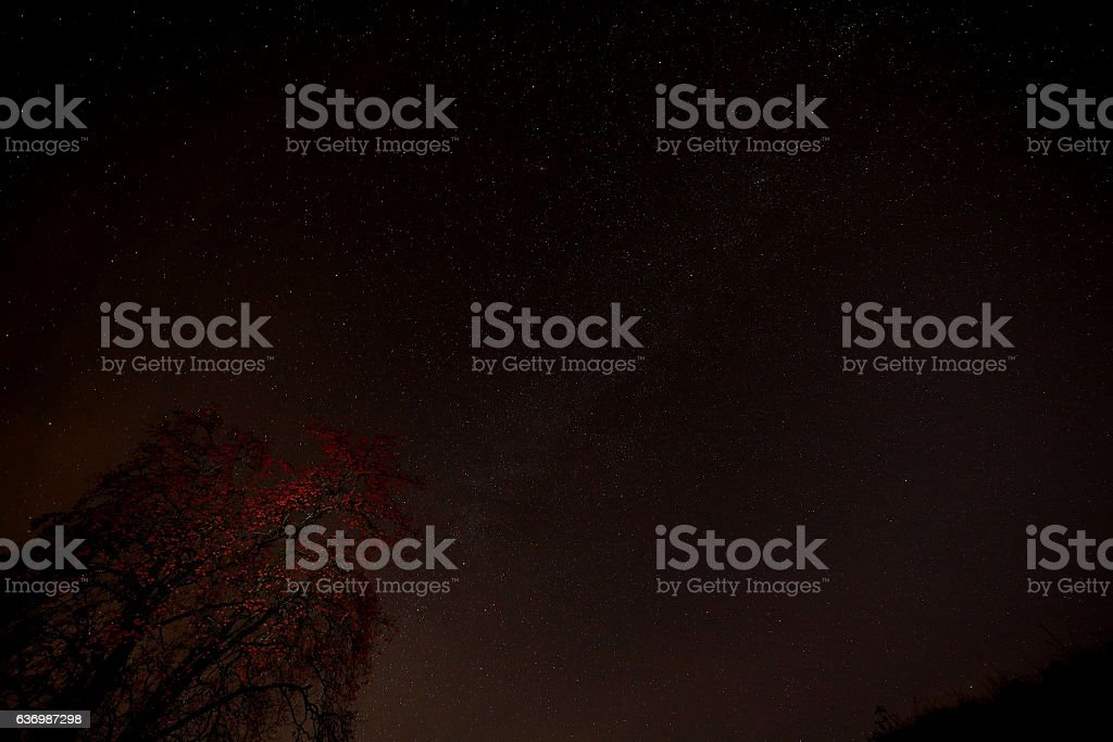 Japanese famous persimmon tree and Milky Way stock photo