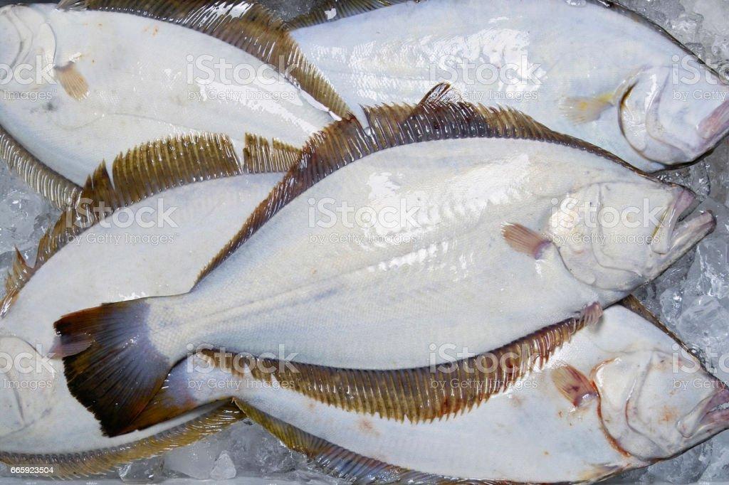 Japanese flounder Paralichthys olivaceus stock photo