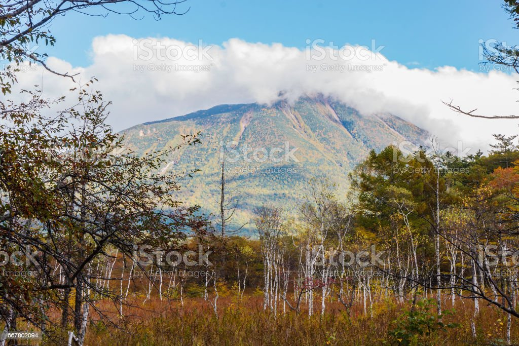 japanese forest stock photo