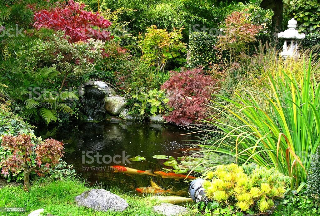 Japanese garden and koi-pond stock photo