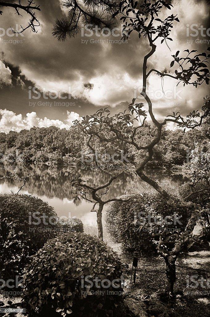 Japanese Garden and Lake stock photo