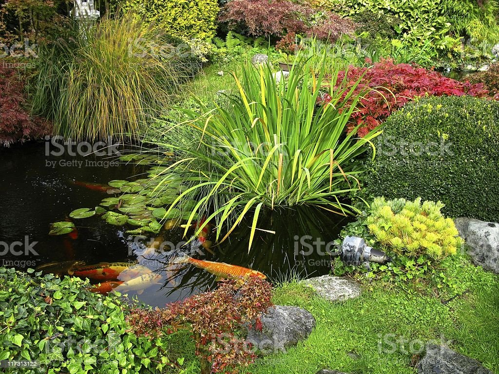 Japanese garden - big kois in the pond royalty-free stock photo