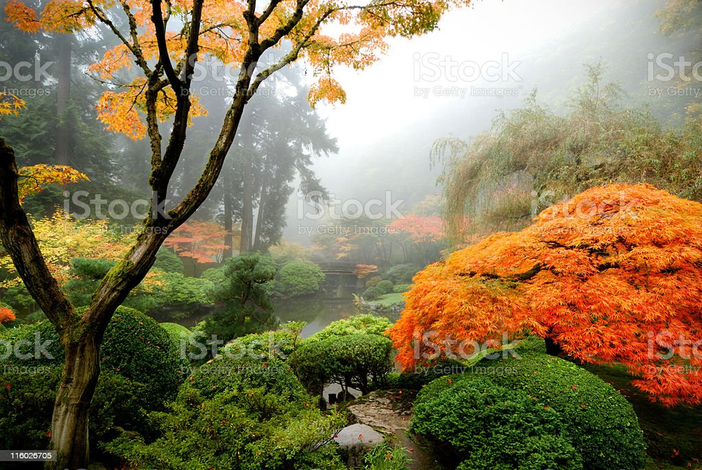 Japanese garden in the Mist stock photo
