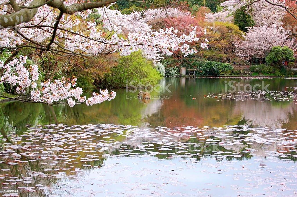 Japanese Garden, Kyoto, Japan stock photo