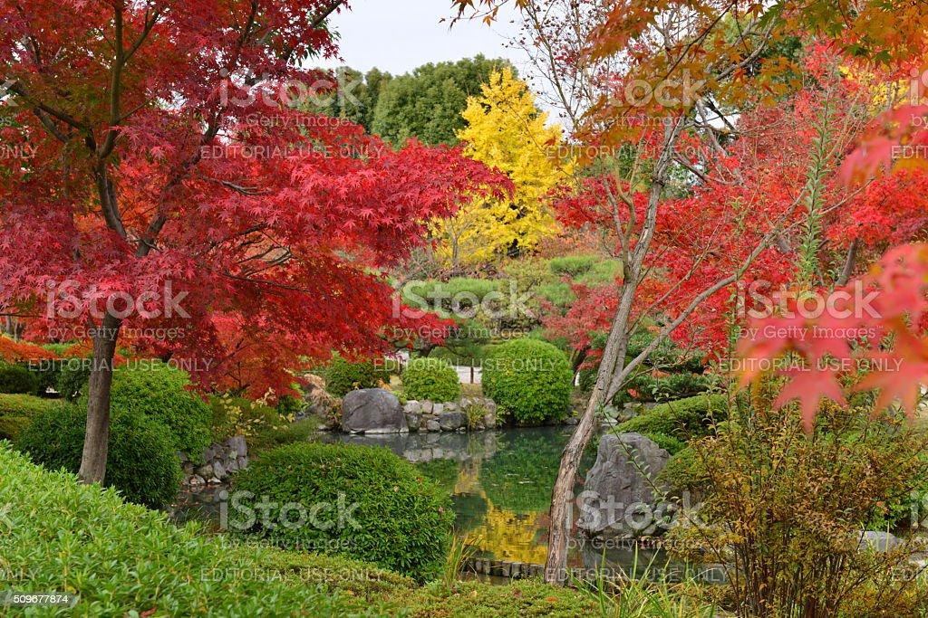 Japanese Garden of Toji Temple in Autumn, Kyoto stock photo