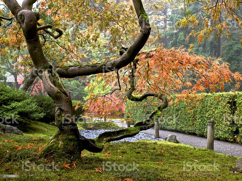 Japanese Garden Path with Maple Tree Autumn Colors Portland Oregon royalty-free stock photo