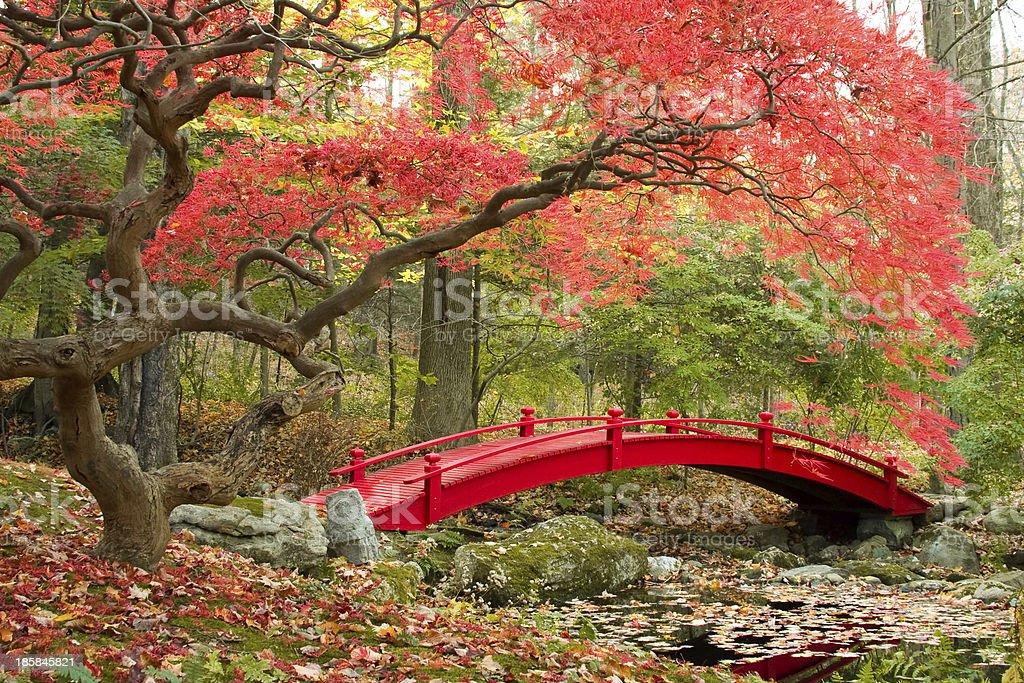 Japanese Garden stock photo