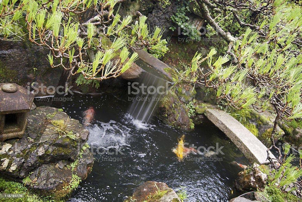 Japanese garden pond with koi carp framed by stone stock photo