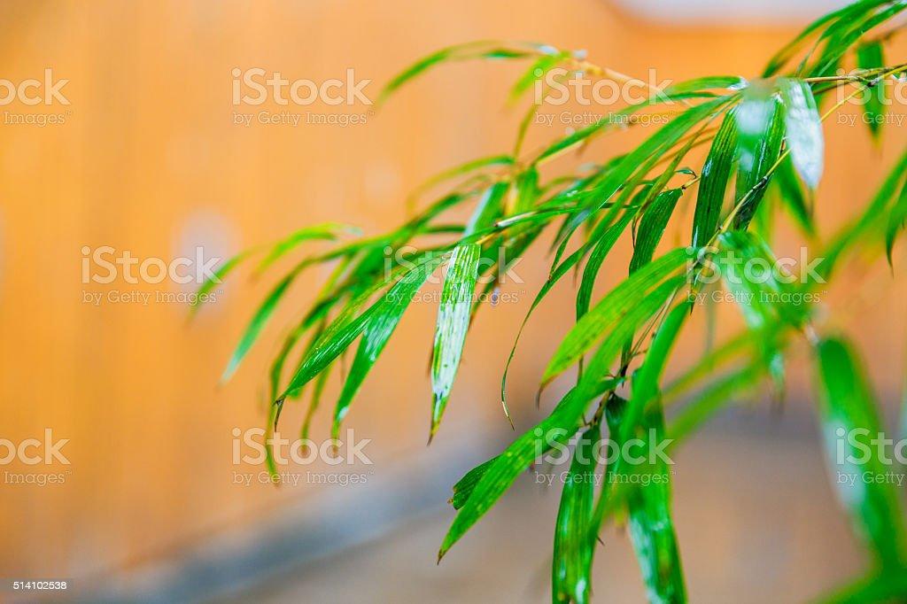 Japanese garden with bamboos stock photo
