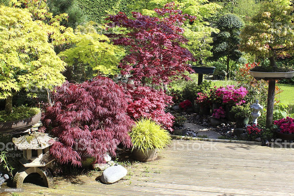Japanese garden with bonsai trees, maples (acers), decking, granite lantern stock photo
