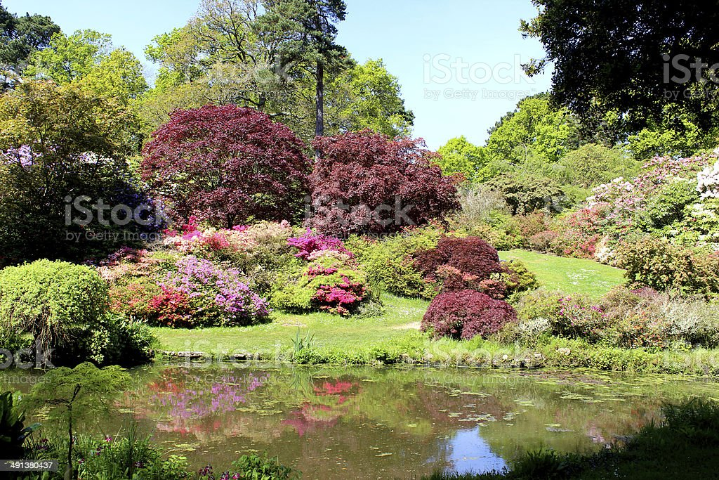 Japanese garden with koi pond, maples (acers), azaleas and bamboo stock photo