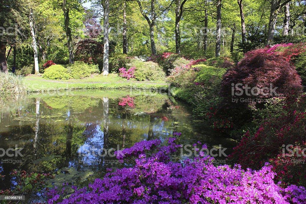 Japanischer Garten Mit Koiteich Ahornbäumen Azaleen Und Bambus ...
