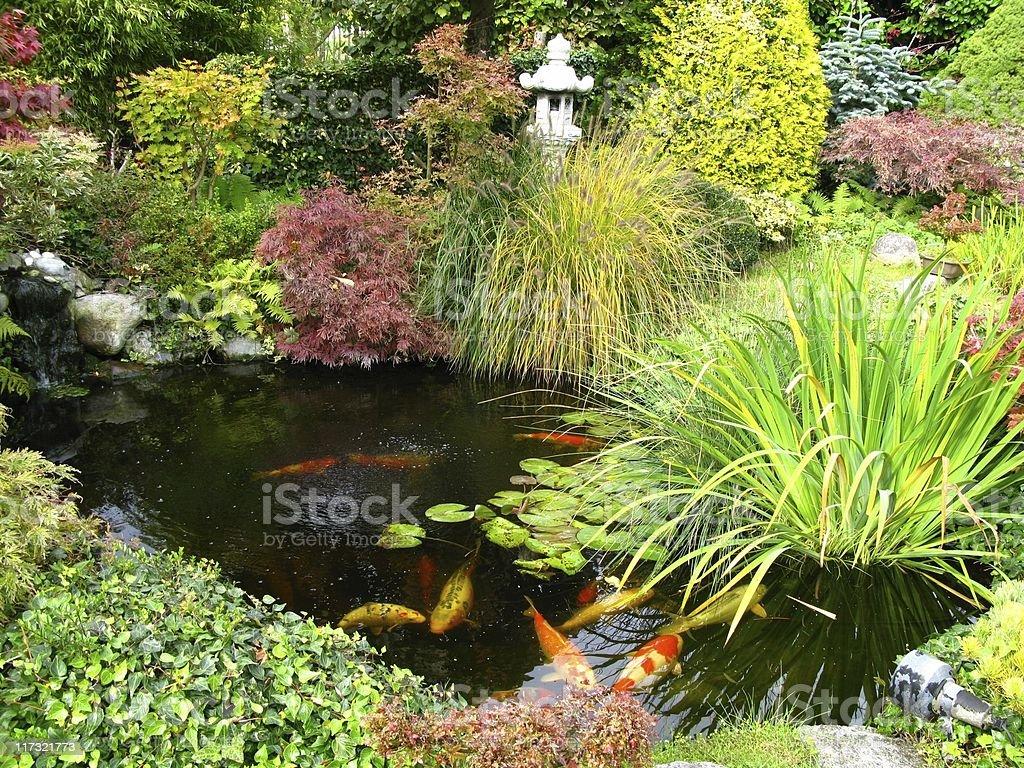 Japanese garden with koi-pond royalty-free stock photo