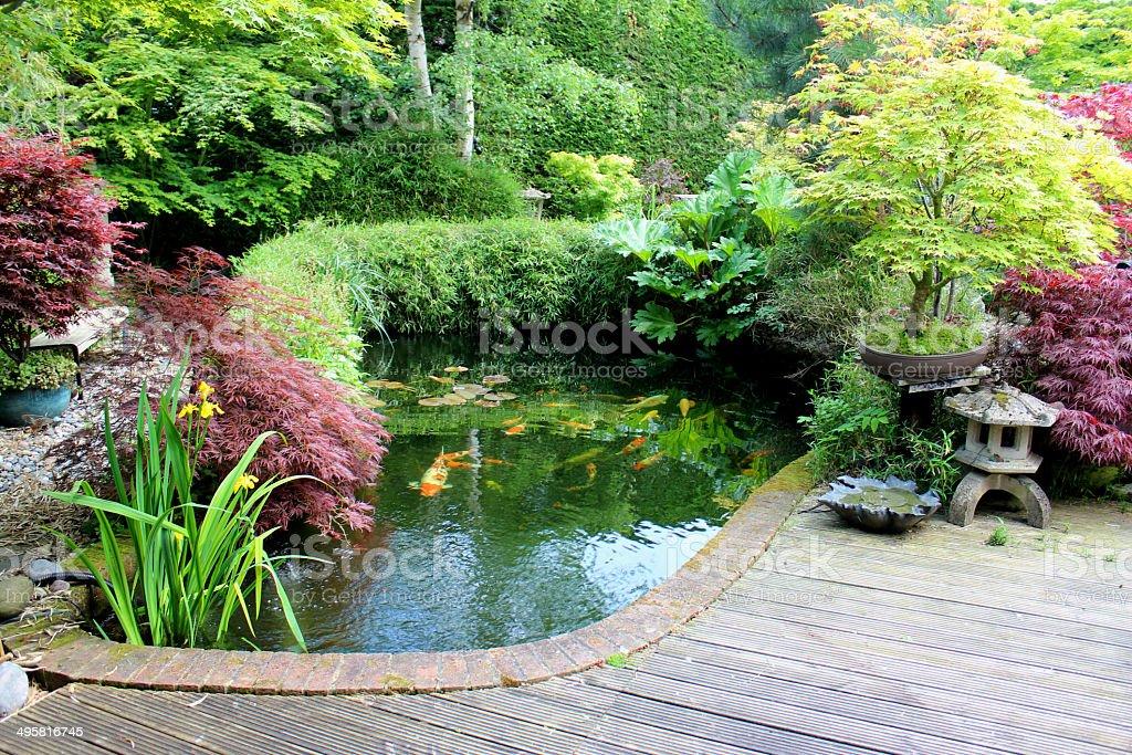 japanese garden with large koi pond lantern bamboo maples bonsai royalty