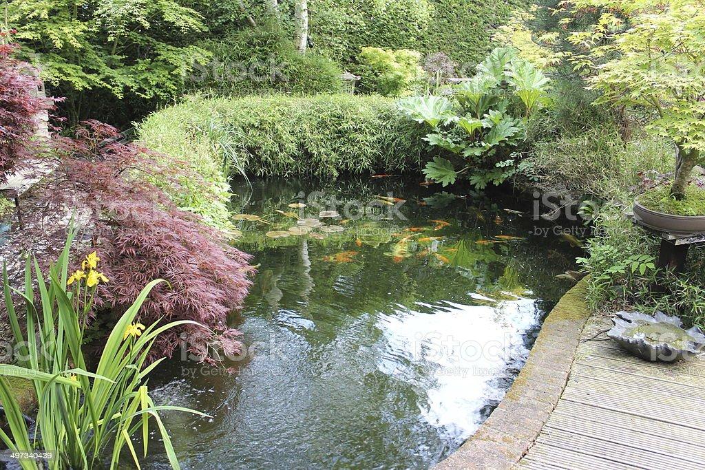 Japanischer Garten Mit Koiteich Große Laterne Bambus Ahornbäumen ...