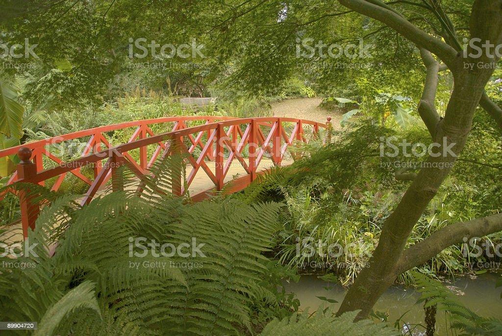 japanese garden with red wooden bridge stock photo