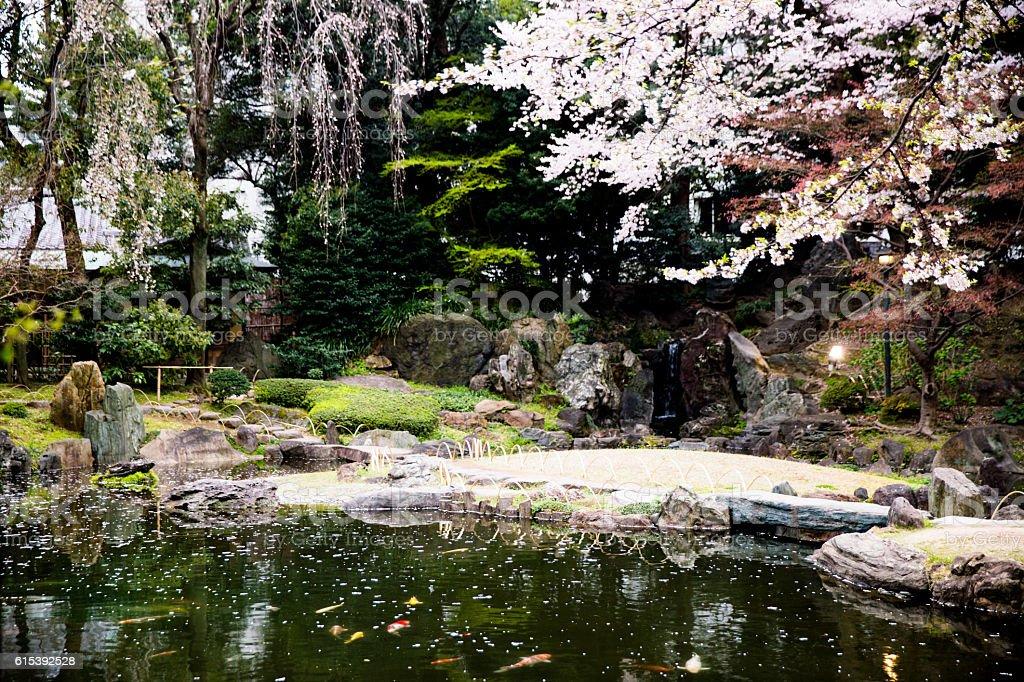 botanical garden bridge built structure cherry blossom flower formal garden japanese