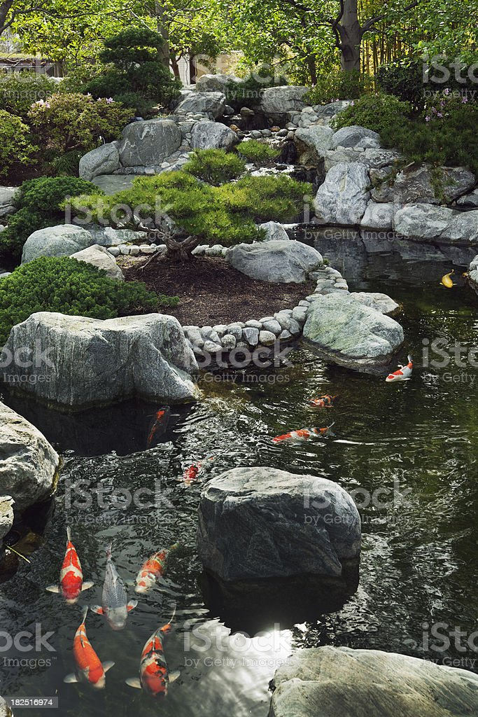 Japanese Garden with Waterfall, Pond and Gold Carp stock photo