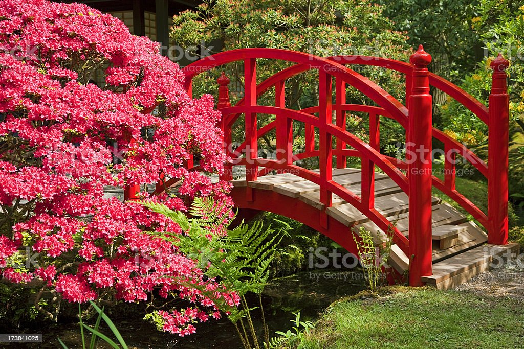 Red Japanese Garden Bridge japanese garden bridges pictures, images and stock photos - istock