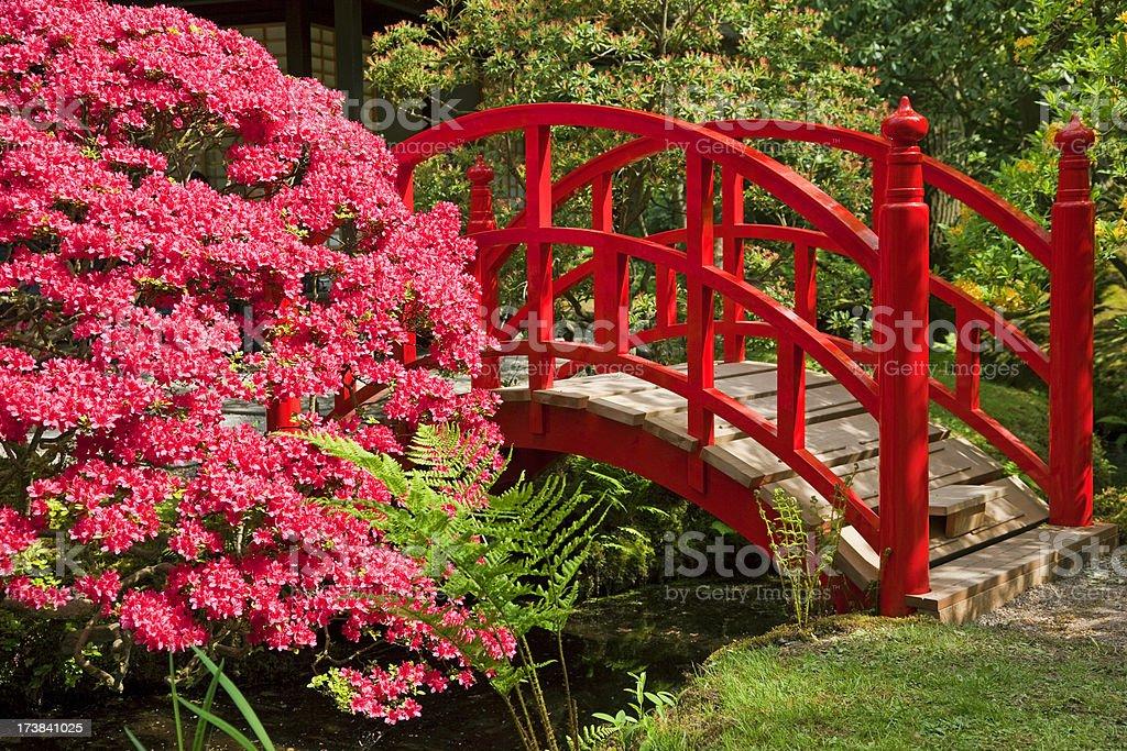 Red Japanese Garden Bridge japanese garden bridges pictures, images and stock photos - istock