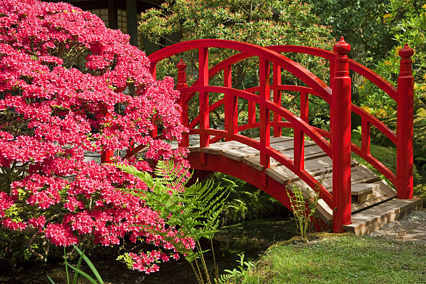 japanese garden 2 xxxl stock photo moon bridge