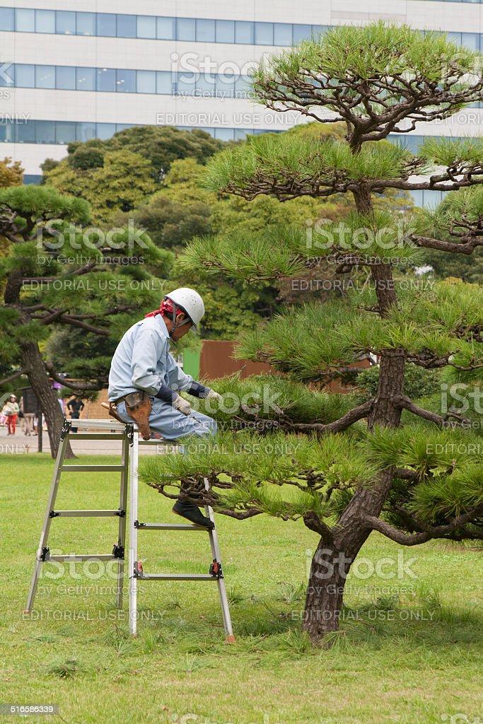 Japanese gardener at work stock photo