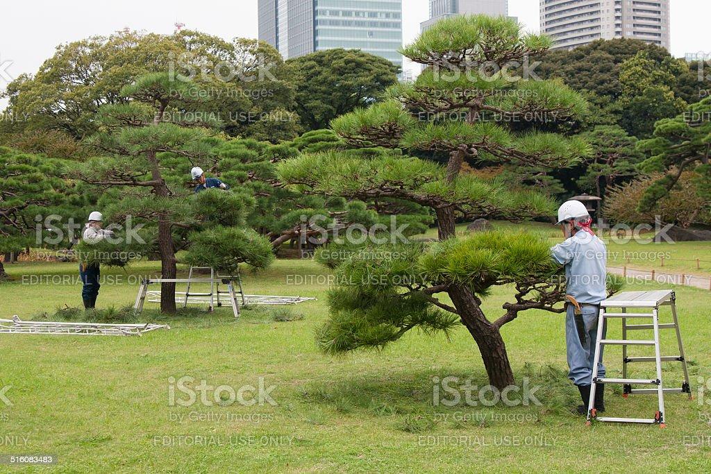 Japanese gardeners at work in garden in Tokyo stock photo